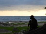 Maman babouin et son rejeton