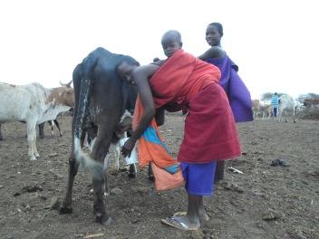 Masaï, Tanzanie