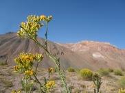 Des fleurs du désert