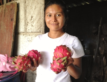 Nicaragua, pitaya les fruits du dragon